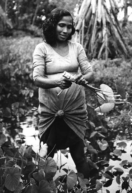 A woman harvesting taro tubers. Fua Mulaku, 1977.