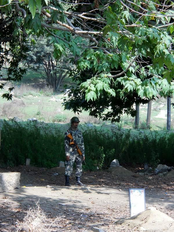 Soldier under the Chinar tree Photo: Freny Manecksha