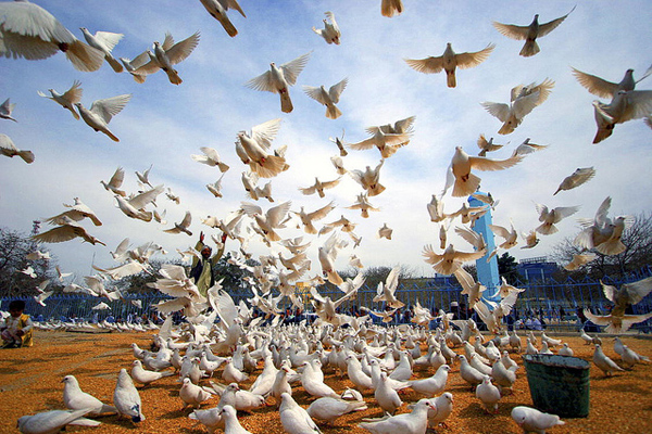 Peace doves fly on the grounds of the historic Hazrat-i-Ali mosque, Afghanistan in observance International Peace Day. Photo: UN Photo / Helena Mulkerns