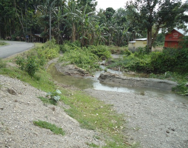 The course of a dong channel in a village near Mushalpur, Baksa, where a subsidiary dong branches off to fields and homesteads. Photo : Aparna Unni