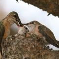 Motherbird