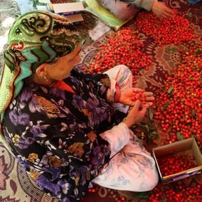 Cherry-picking in Kashmir